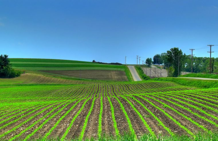 Pozytywne znaczenie rolnictwa ostatnich lat